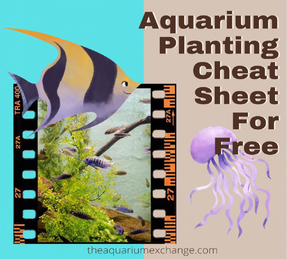 Aquarium Planting Aquascaping Cheatsheet Checklist FoolProof Tips On Maintaining Beautiful Tank